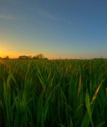 Cena zemědělské půdy v roce 2015