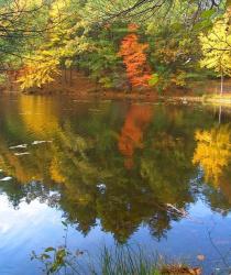 Jak se bude danit plocha rybníka v roce 2015?