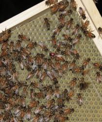 Dotace pro včelaře