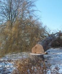 Kácení stromů na vlastním pozemku