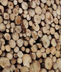 PGRLF opět přispívá na lesní hospodářství