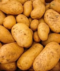 Zemědělci letos sklidí méně brambor