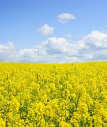 Co je ekologické zemědělství a jak s ním začít?