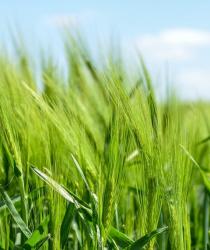 Vláda schválila mimořádnou podporu pro zemědělce, dostanou až 600 milionů