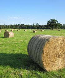 Zemědělci odkládají sklizeň sena, očekávají horší sklizeň