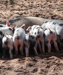 Ministerstvo zemědělství pomohlo zemědělcům zkrize