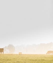 Cena zemědělské půdy strmě roste