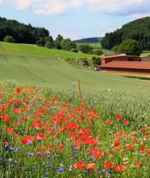 Pásy lučních květů mohou nahradit nyní používané postřiky