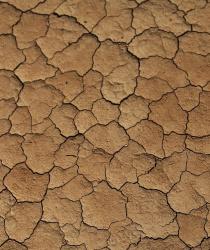 O kompenzaci škod způsobených suchem žádá přes tři tisíce zemědělců