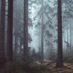 Novela zákona o lesích slibuje efektivnější boj s kůrovcem