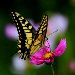 Mizí i druhy, které byly před dvaceti lety běžné, varuje biolog.