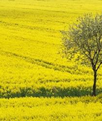 Z polí zmizely po sklizni žížaly. Zemědělci zase nasadili chemoterapii