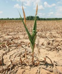 V Česku chybí zásadní opatření pro boj se suchem, stejně jako potřebná právní úprava.