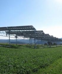 Spojení zemědělství a solární energetiky nese vyšší sklizeň.