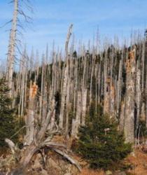 Kůrovec - nenápadný škůdce, působící velké škody