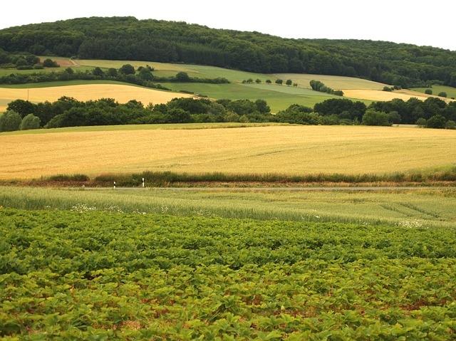 Změna orné půdy na trvalý travní porost