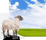 Zemědělské pozemky